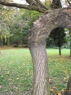 Drzewo w parku miechowickim