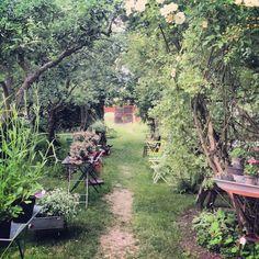 Verdus veranda, Hablingbo, Gotland – Gotlandstips.se  #gotland #gotlandstips #sweden #hablingbo #garden #shopping #path #plants #grow