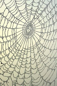 ontheborderland:  The bird a nest, the spider a web, man friendship. —William Blake (Image via ~J0~) Thank you ontheborderland.