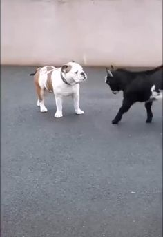 Cute Animal Videos, Funny Animal Pictures, Funny Videos Of Animals, Funny Photos, Cute Little Animals, Cute Funny Animals, Funny Dog Videos, Funny Dogs, Funny Memes