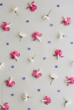 Flower background by Ruth Black - Flower, Background - Stocksy United