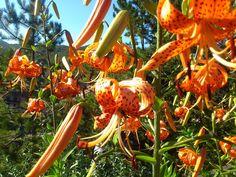 Así de bonito está nuestro jardín en verano ¿Te apetece venir a verlo?