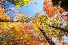 Fall Colors 2014.I shot this one yesterday, Weather was beautiful and Fall colours added more to enjoy it.