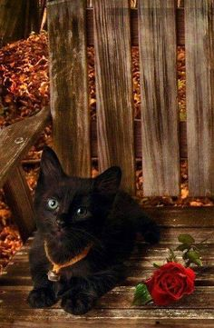 kitty on a bench