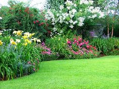 The site is:  http://www.LearnToGarden.net, Left to right - Catmint daylily red cascade climbing rose White Natchez Crepe Myrtle Russian Sage Petunia (Annuals), Yards Design