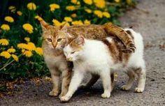 Los egipcios tenian como diosa de la fertilidad a una gata por una buena razón, y es que los gatos son unos de los mamíferos que...