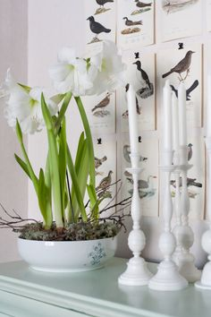 White   Flowers, pot, candles and candle sticks, background of delicately rendered bird pictures held by clips.....  together, so lovely.