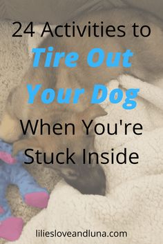 24 activities to do with your dog when you are stuck inside. Husky Pet, Pet Dogs, Dog Cat, Stop Dog Barking, Dog Training, Training Tips, Pet Gate, Dog Games, Dog Activities