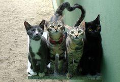 Kotki na przydomowej ścieżce.  Projektowanie i pielęgnacja ogrodów: www.transgaj.pl  Shadowcrest Gardens - animals cats