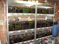 Shrimp Tank, Fish Breeding, Tropical Fish Tanks, Aquarium Design, Fish Farming, Betta, Design Ideas, Home Decor, Gardening