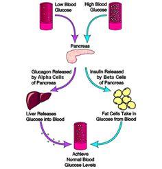 Gluconeogenesis vs Glycolysis