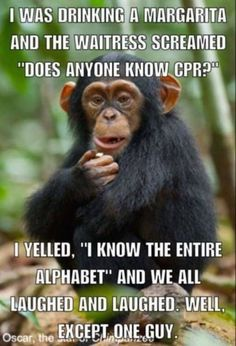 Is it wrong that I think this is funny? - Funny Monkeys - Funny Monkeys meme - - Is it wrong that I think this is funny? The post Is it wrong that I think this is funny? appeared first on Gag Dad. Funny Shit, Haha Funny, Funny Jokes, Hilarious, Cpr Funny, Funny Fails, Funny Stuff, Medical Humor, Nurse Humor