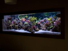 Hi All, been lurking aorund for ages gathering info for my new tank. I've seen some really inspiring tanks on here- and not just the big ones either,. Home Aquarium, Reef Aquarium, Salt And Water, Fresh Water, Saltwater Aquarium Fish, Marine Tank, Nano Tank, Cool Tanks, Tank Design