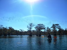 Kayaking Lake Chicot at Chicot State Park in Louisiana. Beautiful views and tons of wildlife.
