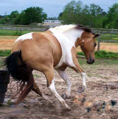 Stop wild horse roundups on pinterest for Negative show pool horse racing