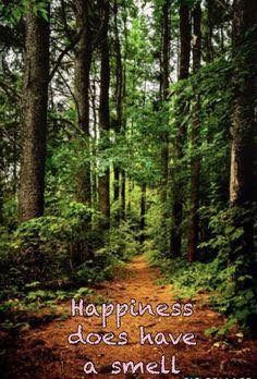 Nature Quotes Trees Wisdom Wilderness 52 Ideas For 2019 Hiking Quotes, Forest Bathing, The Mountains Are Calling, Nature Quotes, Forest Quotes, Walk In The Woods, John Muir, Adventure Quotes, Romance