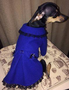 Cashmere dog coat. Cute dog coat. Dog jacket. Dog custom made