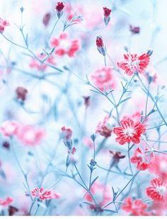 ℓυηα мι αηgєℓ ♡ — Flowers en We Heart It. Flowers Nature, Spring Flowers, Wild Flowers, Blush Flowers, Motif Floral, Plantation, Belle Photo, Beautiful Images, Spring Time