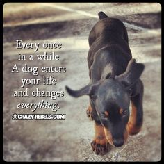 A dog changes everything! #love #quotes #puppy #doberman