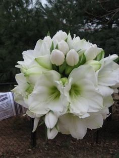 White amaryllis and tulip bouquet