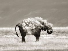 Photographer Marina Cano Captures Wild Animals in Their Most Unguarded Moments | PetaPixel