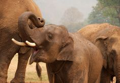 Tips on how to choose an elephant sanctuary, and how to enjoy it once you're there.