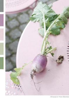 turnip color-schemes