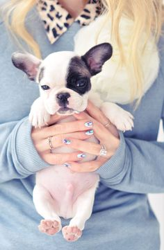 frenchie puppy and engagment ring