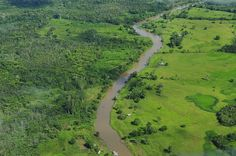 "The Environment in the News: Ecosystems Face Unprecedented ""Climate Change Velocity"" Agriculture, World Environment Day, Amazon River, Land Use, Forest Landscape, Amazon Rainforest, Environmental Issues, Global Warming, Permaculture"