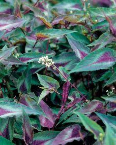 Beautiful, Low-Maintenance Plants | Fine Gardening