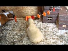 10 DIY's For Your Guinea Pig Cage - LAUGHTARD
