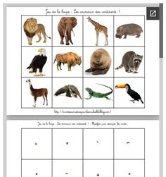 Magnifying glass game: The animals of the continents - Montessori EtCie . Montessori Science, Preschool Games, Preschool Learning, Dear Zoo, Fun Facts About Animals, Animal Activities, Zoo Animals, Magnifying Glass, Explorer