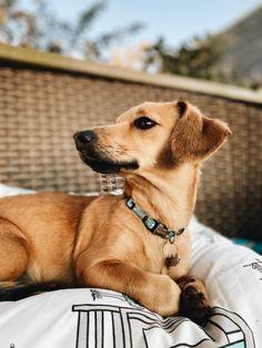 Labrador Retriever, Vsco, My Photos, Dogs, Animals, Labrador Retrievers, Animales, Animaux, Pet Dogs