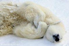 I'm a sleeping polar bear....maybe the best kind!