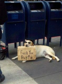 Funny pictures about Hardcore Homeless Dog. Oh, and cool pics about Hardcore Homeless Dog. Also, Hardcore Homeless Dog photos. Memes Humor, Dog Memes, Funny Memes, Hilarious, Reaction Pictures, Best Funny Pictures, Funny Photos, Animal Memes, Funny Animals