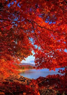 Fall foliage at Lake Tazawa, Japan.