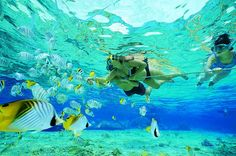 Snorkeling in pompano beach Florida Spear hutning fish while snorkeling