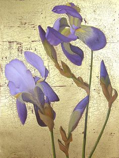 Irises by  Prentice Studio Oil ~ 12 x 9