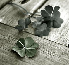 A four leaf clover is often considered good luck, but it's also a part of an Irish love ritual.