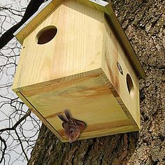 dimensions for a squirrel house - - Yahoo Image Search Results Bird Nesting Box, Nesting Boxes, Bird House Feeder, Diy Bird Feeder, Squirrel Home, Squirrel Feeder, Zinc Roof, Small Animal Cage, Bird House Plans