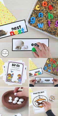 Bird Theme Preschool Lesson Plans