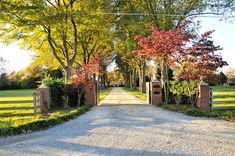 tree lined driveway - Google Search