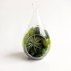Forest Teardrop Small Terrarium with Air Plant // DIY Kit
