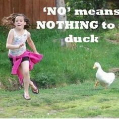 Funny Quotes about Ducks