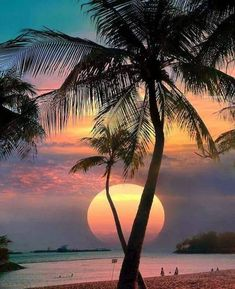 Wonderful Places: Sentosa Island - Singapore ✨🌴🌴🌴✨ Picture by ✨✨ . for a feature . Beautiful Sunrise, Beautiful Beaches, Beautiful Beautiful, Beach Pictures, Nature Pictures, Sentosa Island Singapore, Photos Voyages, Beach Scenes, Sunset Beach