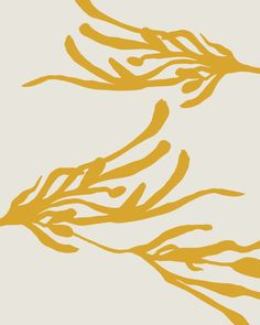 Marigold seaweed, sumi on paper, digitally coloured by tristan b.