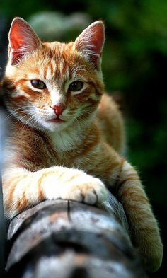 Pin By Joan On Kitty Kitty Cats Kittens Cats Pets