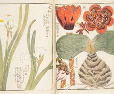 Este libro se considera el primer libro de arte exhaustivo sobre botánica de Japón. Fue publicado a finales del período Edo y tiene un total de 92 volúmenes (los volúmenes 1-4 están incompletos) e incluye más de 1900 variedades de plantas. El autor, Iwasaki Kan'en (1786-1842), era un vasallo del shogunato. La obra contiene ilustraciones a color de especies silvestres, especies de jardín y especies importadas, con los nombres taxonómicos en los epígrafes. También incluye explicaciones biol...