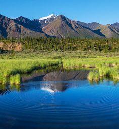 Serenity lake in tundra on #Alaska