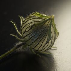 Greenhouse / Flower-of-an-hour on Behance